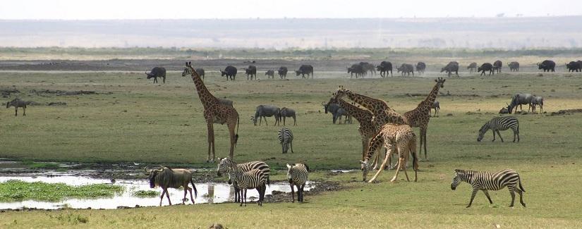 Best Travel Agency in East Africa